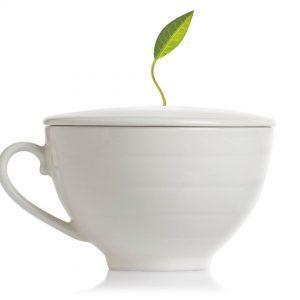 2726 Cafe Cup Bone White